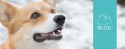 Das Fertigfutter für den Hund pimpen – Aber richtig!