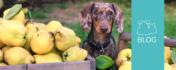 Karnivor trifft auf Vegetarier – Wenn die Frischfütterung zur Herausforderung wird